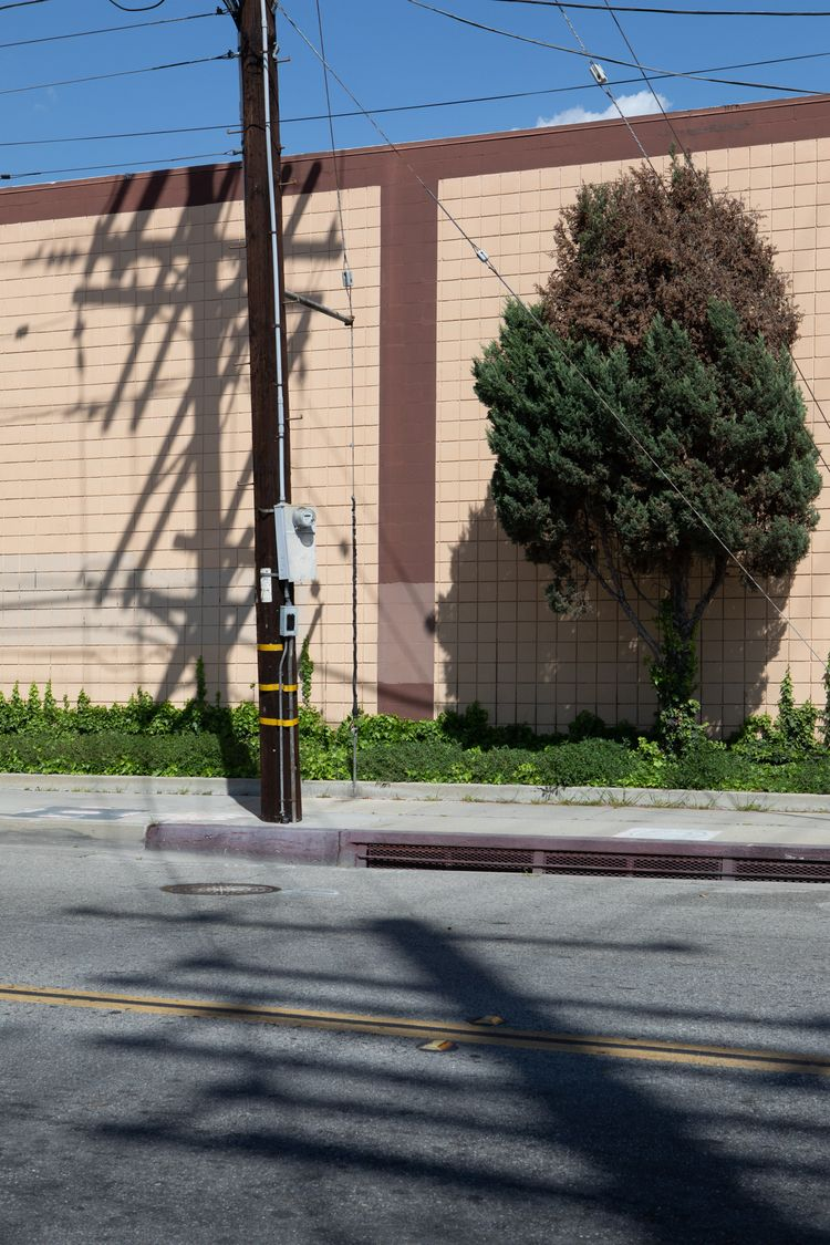 Telephone Pole, Shrub, Rush St - odouglas | ello