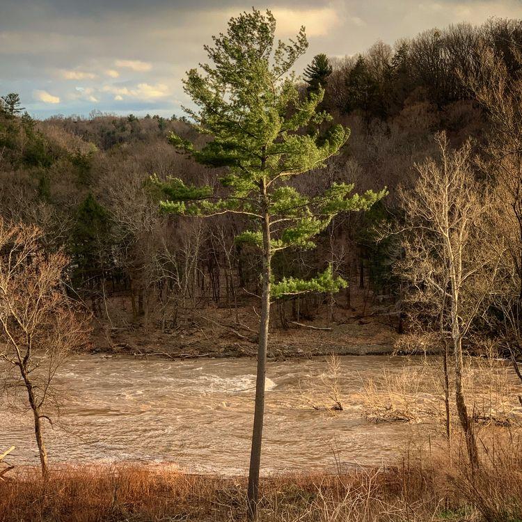 Live Wood / Dead - photography, photooftheday - alon   ello