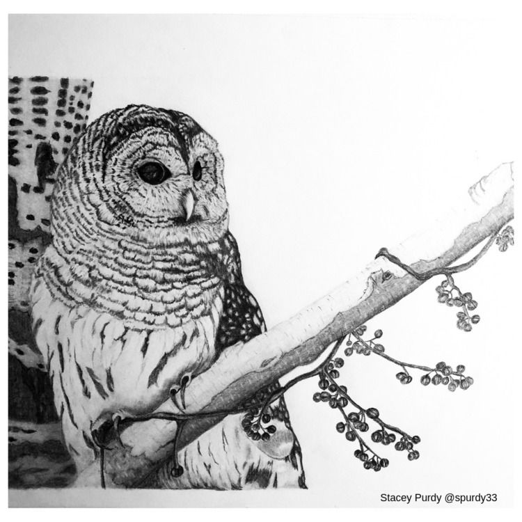 Finished owl drawing. Started S - spurdy33 | ello