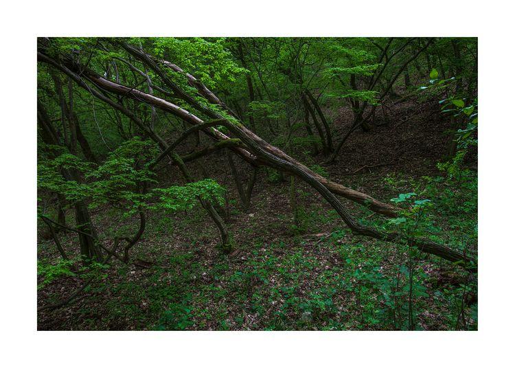 photography, contemporaryphotography - zsolophoto   ello