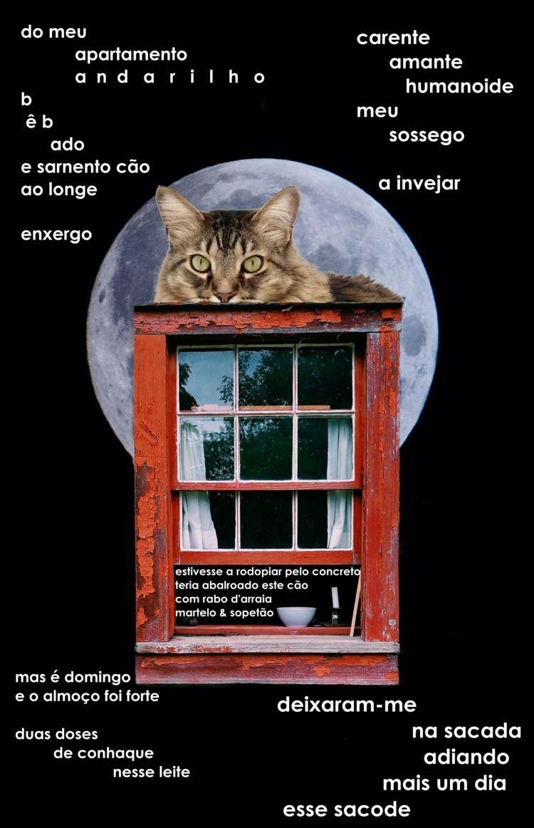 Gato fuleiro meu coberto aparta - fabio_navarro | ello