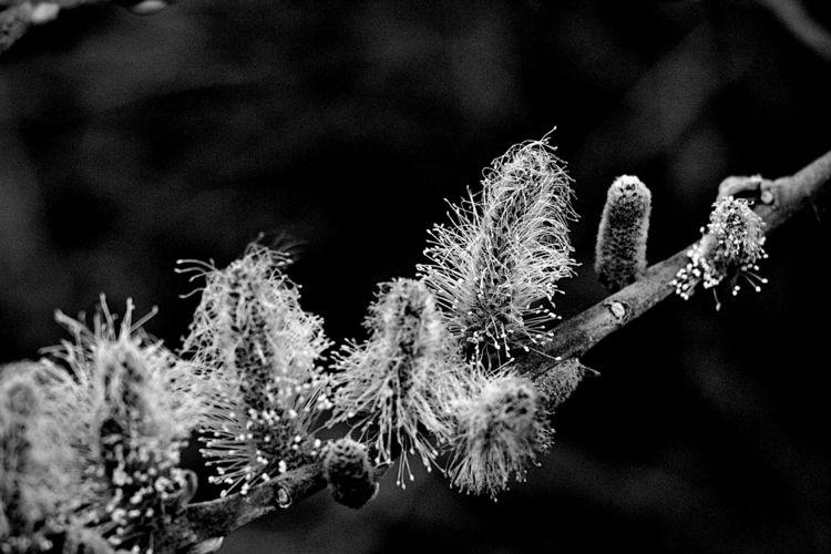 Botanical Monochrome 6570 - flowerphotography - dorian-stretton | ello