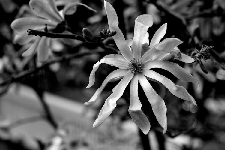 Botanical Monochrome 6575 - flowerphotography - dorian-stretton | ello