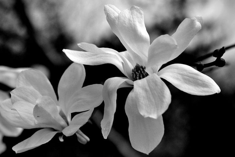 Botanical Monochrome 6579 - flowerphotography - dorian-stretton | ello