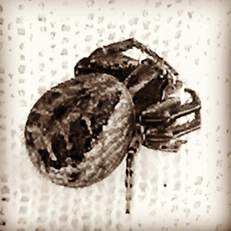 Darktronics Battle Spider Hybri - thedailywealthyaffiliate | ello