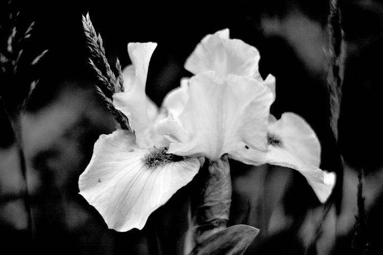 Botanical Monochrome 6880 - flowerphotography - dorian-stretton | ello
