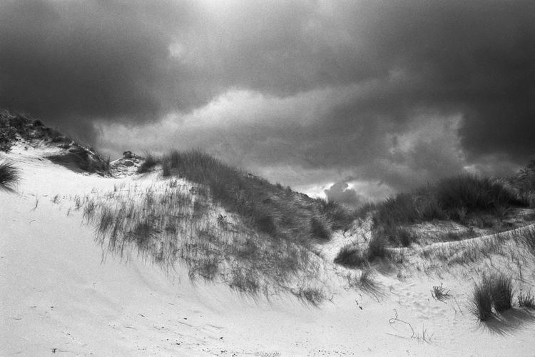 analog, film, photography, blackwhite - loyph | ello