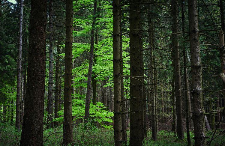 Glowing woods trip son Sascha.  - klausheeskens   ello