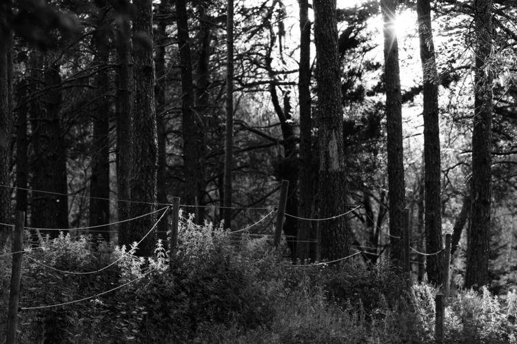 Loratadine - photography, sweden - marcushammerschmitt | ello