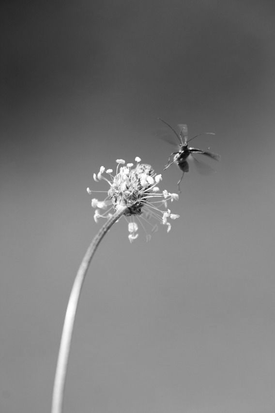 photography, romantic, insect - pixdreaming | ello