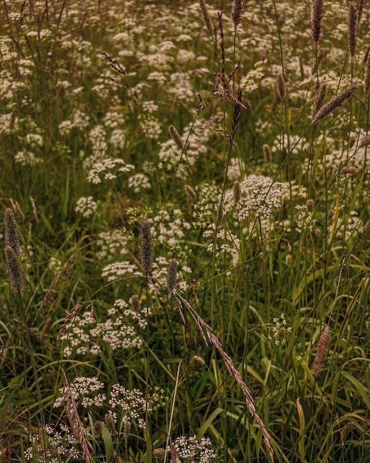 Nature soothes - nature, grass, flowers - everythingisntforeveryone | ello