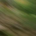 Alized (@alized) Avatar