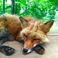 @fox9tails Avatar
