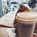 Alice (@alicedherckers) Avatar