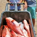 Gulf Shores Fishing (@gulfshoresoffshorefishing) Avatar