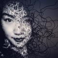 Charlotte Qin (@qintheory) Avatar