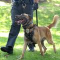 Marysville Dog Training  (@marysvilledogtraining) Avatar
