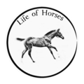Life Of Horses (@lifeofhorses) Avatar