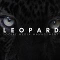 Leopard Social Media (@medialeopard) Avatar