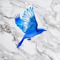 Mountain Blue (@mymountainblue) Avatar
