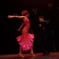 Soffie Dance Studi (@soffiedancestudio) Avatar