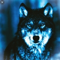 Selen Wolf (@selenwolfwtites) Avatar