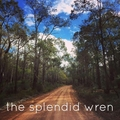 the splendid wren (@the_splendid_wren) Avatar