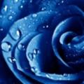 VictoriaBlue (@victoriablue1) Avatar