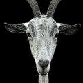 Golea Vlad (@darkgoat13) Avatar