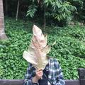 Aamir Khuller (@whoismirr) Avatar