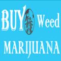 Gary McCathy (@buyweedmarijuanas) Avatar