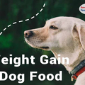 Best dog food for weight gain pitbull (@carlarspicer) Avatar