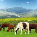 Hunter International Livestock (@hunterinternationallivestockie) Avatar