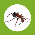 Local Pest Control Newcastle (@localpestcontrolseo) Avatar