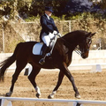 ShelleyBrowningDressage (@shelleybrowningdressage) Avatar