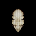 lostc_ities (@lostc_ities) Avatar
