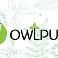Owlpure (@owlpure) Avatar
