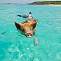 Jet Charter Bahama (@jetcharterbahamas) Avatar