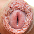 The foreskin is good for the penis (@foreskinpride) Avatar