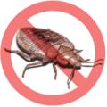 Bed Bug Pest Control Mississauga (@911bedbugs) Avatar