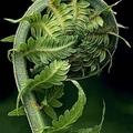 @tripod13iv Avatar