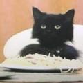 Spaghetti Cat (@sadpizzaboy) Avatar
