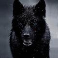 @old_man_wolf Avatar