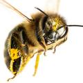 Bee Control Service Brisbane (@beecontrolservicebrisbane) Avatar