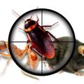 Ace Pest Control Geelong (@acepestcontrol01) Avatar