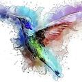 Mágicos Pirineos (@thefirebird) Avatar