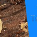 Termite Control Melbourne (@termitecontrolmelbourne1) Avatar