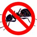 Spider Control Perth (@antcontrolperth) Avatar