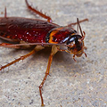 Pest Control Wollongong (@antipestcontrolwollongong) Avatar