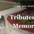 Forget Me Not Pet Cremations (@forgetmenotpetcremation) Avatar